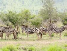 Guide du parfait safari au Parc Kruger
